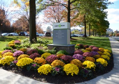 Commercial Fall Mums