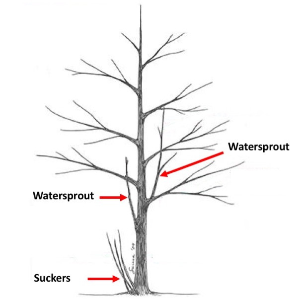 Plant of the Week: Tree Hazards