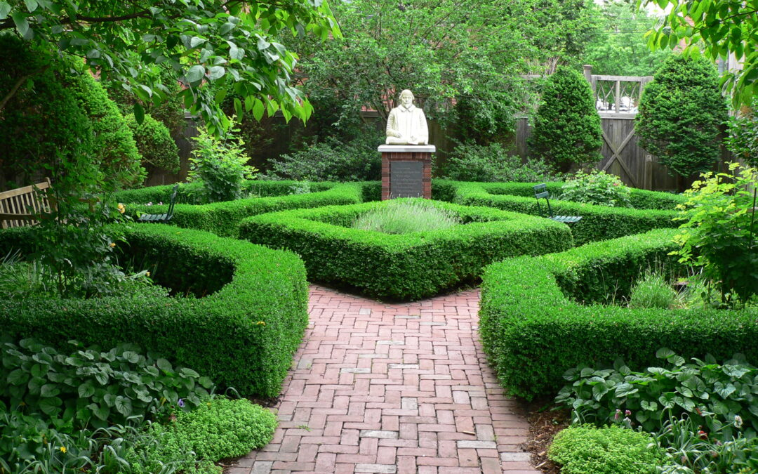 Plant of the Week: Boxwoods
